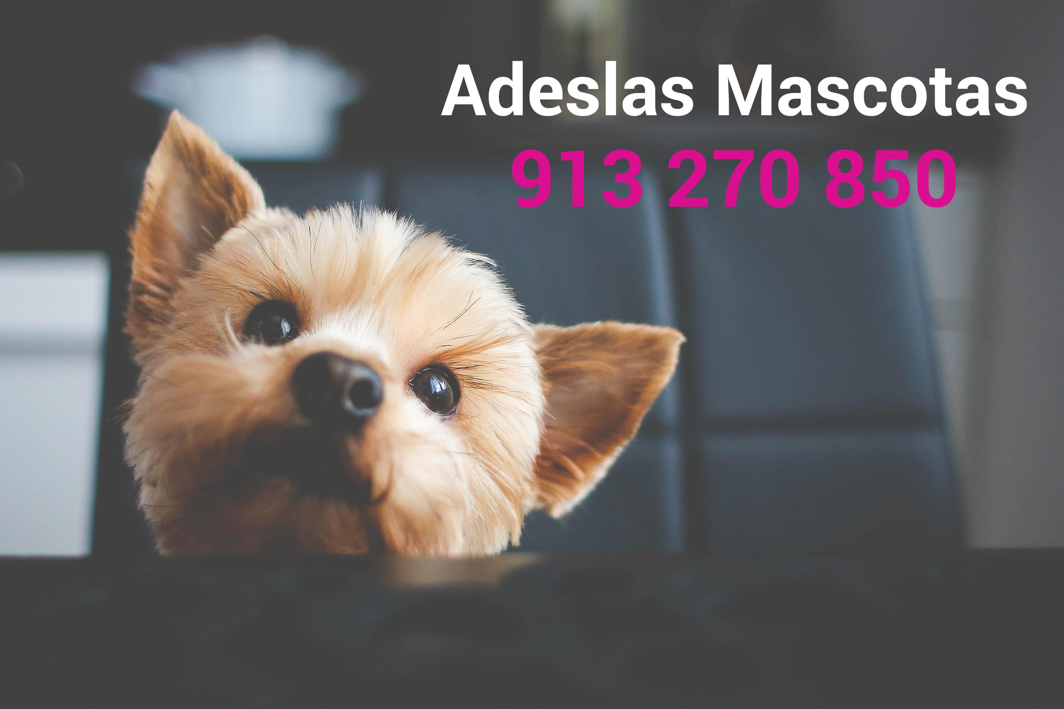 Adeslas Mascotas Seguros Adeslas 913 270 850