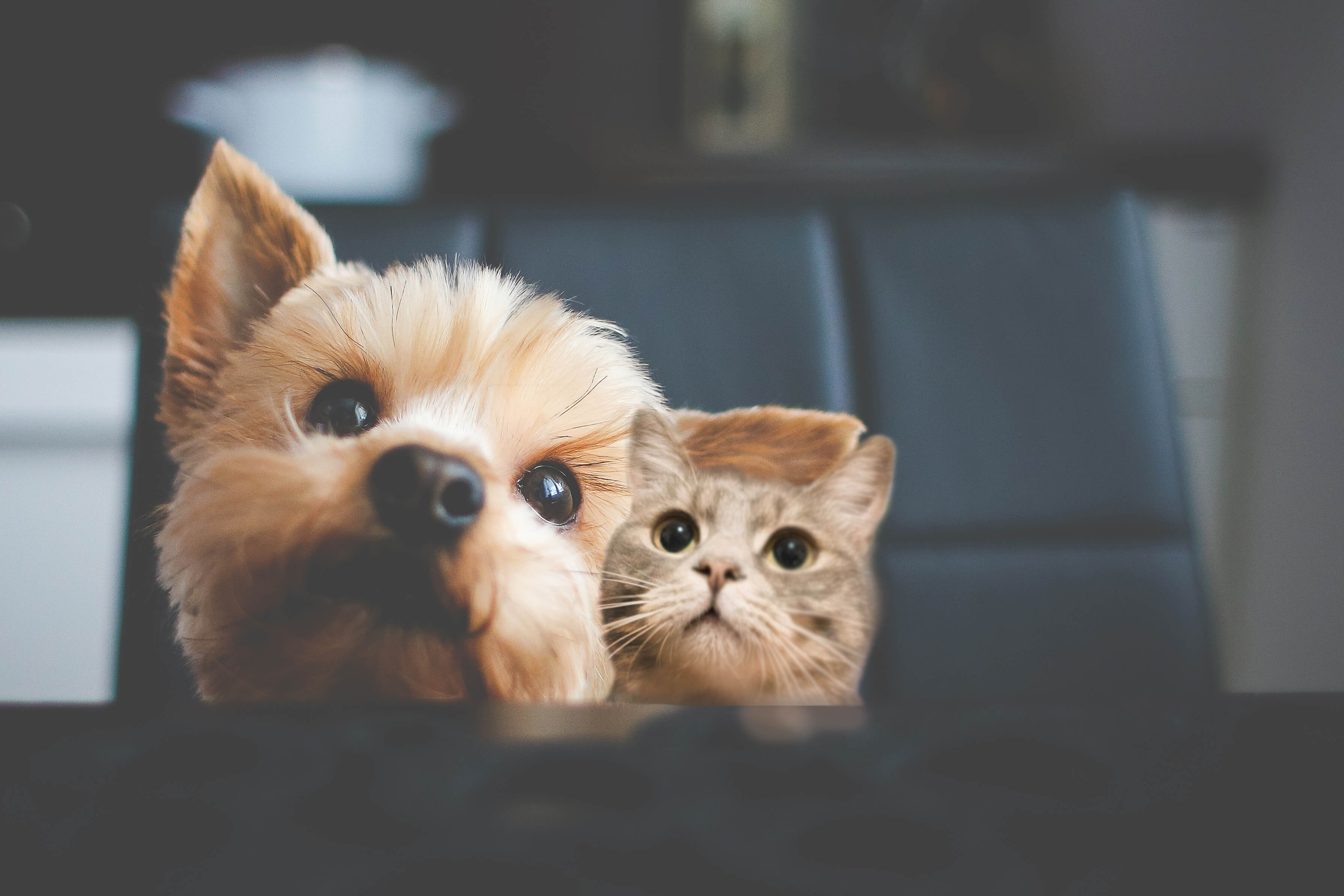 Adeslas Mascotas
